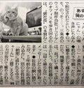 2/21(木)読売新聞にねこすけが掲載されました!